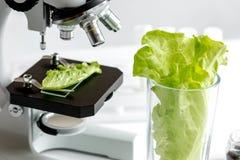 Conceito - verifique suplementos dietéticos no laboratório no microscópio Imagens de Stock