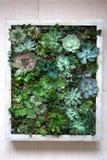 Conceito vertical do jardim da parede imagem de stock royalty free
