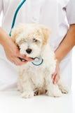 Conceito veterinário do cuidado Fotos de Stock Royalty Free