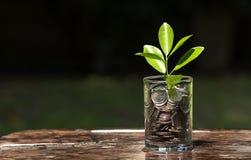 Conceitos do investimento Imagem de Stock