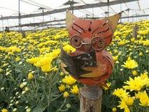 Concentré sage de hibou sur la lecture dans la plantation jaune large de fleur de chrysanthème Photographie stock