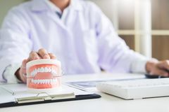Concentrated dentist sitting at table with jaw samples tooth model in dental office professional dental clinic.  royalty free stock photography