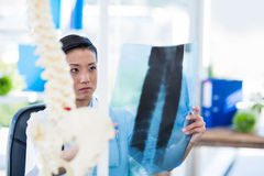 Concentrated doctor analyzing X-rays Royalty Free Stock Images