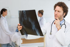 Concentrated doctor examining Xray Royalty Free Stock Image