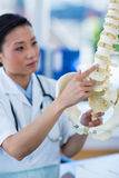 Concentrated doctor showing anatomical spine Royalty Free Stock Photo