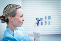 Concentrated female dentist looking at x-ray Royalty Free Stock Photography