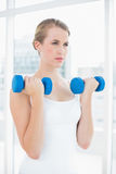 Concentrated fit woman exercising with dumbbells Stock Photography