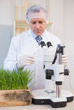 Concentrated food scientist. In laboratory royalty free stock photo