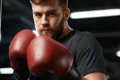 Concentrated handsome young strong sports man boxer. Image of concentrated handsome young strong sports man boxer posing in gym and looking at camera royalty free stock photos