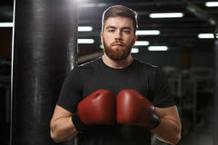 Concentrated handsome young strong sports man boxer. Photo of concentrated handsome young strong sports man boxer posing in gym and looking at camera royalty free stock photos