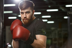 Concentrated handsome young strong sports man boxer. Photo of concentrated young strong sports man boxer posing in gym and looking at camera stock image