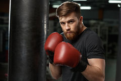 Concentrated handsome young strong sports man boxer. Picture of handsome young strong sports man boxer posing in gym and looking at camera royalty free stock photos