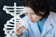 Concentrated little researcher exploring chromosome model in the laboratory Royalty Free Stock Photo
