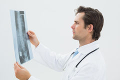 Concentrated male doctor examining spine xray. Side view of a concentrated male doctor examining spine xray over white background stock photo