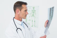 Concentrated male doctor looking at spine xray Stock Image