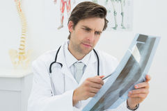 Concentrated male doctor looking at xray picture of spine Royalty Free Stock Photos