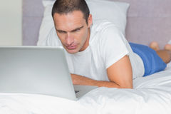 Concentrated man lying on bed using his laptop Stock Photos