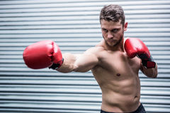 Concentrated muscular boxer. In crossfit gym royalty free stock photography