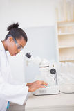 Concentrated scientist looking at petri dish Stock Images