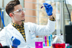Concentrated scientist making experiment in laboratory. Portrait of concentrated scientist making experiment in laboratory Stock Images