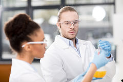 Concentrated scientists analyzing test tube in laboratory Stock Image