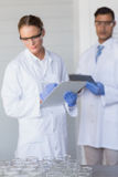 Concentrated scientists looking at beakers Royalty Free Stock Photography