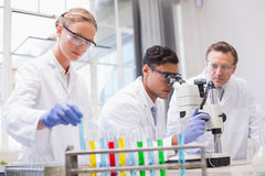 Concentrated scientists working together Royalty Free Stock Photography
