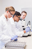 Concentrated scientists working together Royalty Free Stock Image