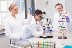 Concentrated scientists working together Royalty Free Stock Photos