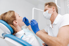 Concentrated skillful dentist performing dental checkup Stock Photos