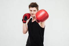 Concentrated young sportsman boxer. Picture of concentrated young sportsman boxer standing isolated over white background. Looking at camera royalty free stock images