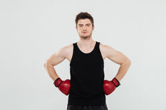 Concentrated young sportsman boxer. Picture of concentrated young sportsman boxer standing isolated over white background. Looking at camera royalty free stock photos