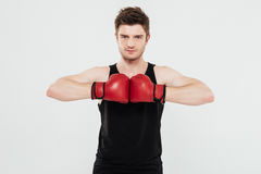 Concentrated young sportsman boxer. Picture of concentrated young sportsman boxer standing isolated over white background. Looking at camera royalty free stock image