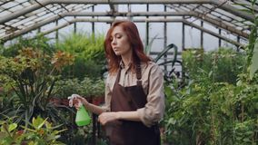 Concentrated young woman is spraying water on plants in greenhouse using spray bottle while her daughter is playing in. Concentrated young woman is spraying stock video footage