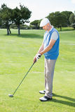 Concentrating golfer lining up his shot. On a sunny day at the golf course Royalty Free Stock Images