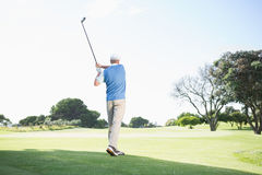 Concentrating golfer taking a shot Royalty Free Stock Image