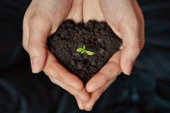 Concentrez sur la petite jeune plante dans le sol noir sur la main de la femme Jour de terre et concept d'écologie Images libres de droits