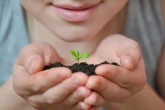 Concentrez sur la petite jeune plante dans le sol noir sur la main de la femme Jour de terre et concept d'écologie Images stock