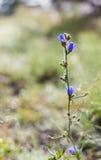 Concentrez sur le wildflower pourpre avec des Webs pendant le matin Photo libre de droits