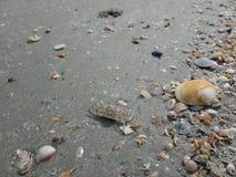 Concentrez sur les restes de l'espèce marine, du sable et de la mer, mer bleue et Photos libres de droits