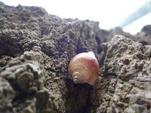 Concentrez sur les restes de l'espèce marine, du sable et de la mer, mer bleue et Photo stock