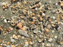 Concentrez sur les restes de l'espèce marine, du sable et de la mer, mer bleue et Photo libre de droits