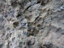 Concentrez sur les restes de l'espèce marine, du sable et de la mer, mer bleue et Photos stock