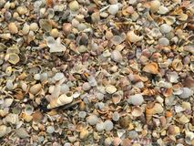 Concentrez sur les restes de l'espèce marine, du sable et de la mer, mer bleue et Images stock