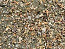 Concentrez sur les restes de l'espèce marine, du sable et de la mer, mer bleue et Photographie stock