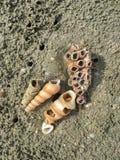 Concentrez sur les restes de l'espèce marine, du sable et de la mer, mer bleue et Images libres de droits