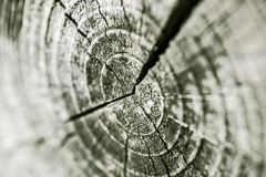 Concentric rings of a trunk Stock Images