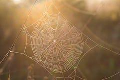 Concentrisch spiderwebclose-up in zonlicht stock afbeeldingen