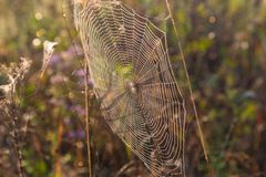 Concentrisch spinneweb in zonlicht royalty-vrije stock afbeeldingen