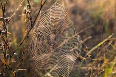Concentrisch spinnewebclose-up op de herfstweide royalty-vrije stock fotografie